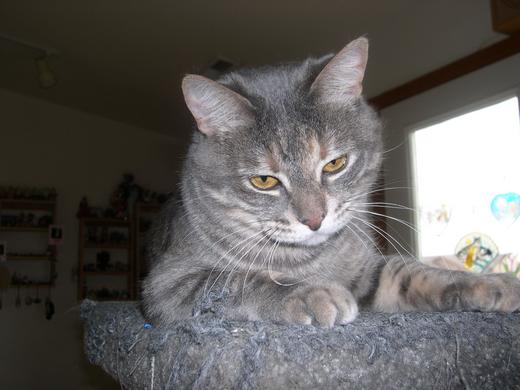 Photo of Gracie Cat