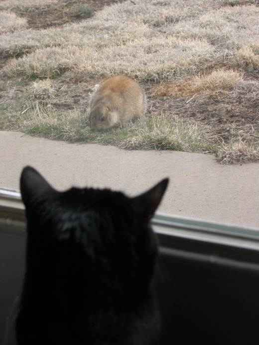 Heidi watching a prairie dog