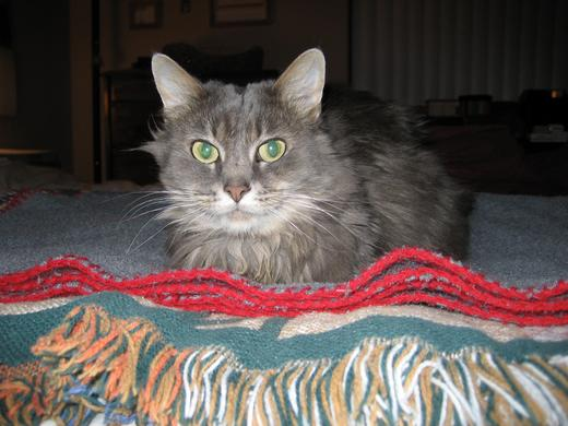 Photo of Stormie Cat